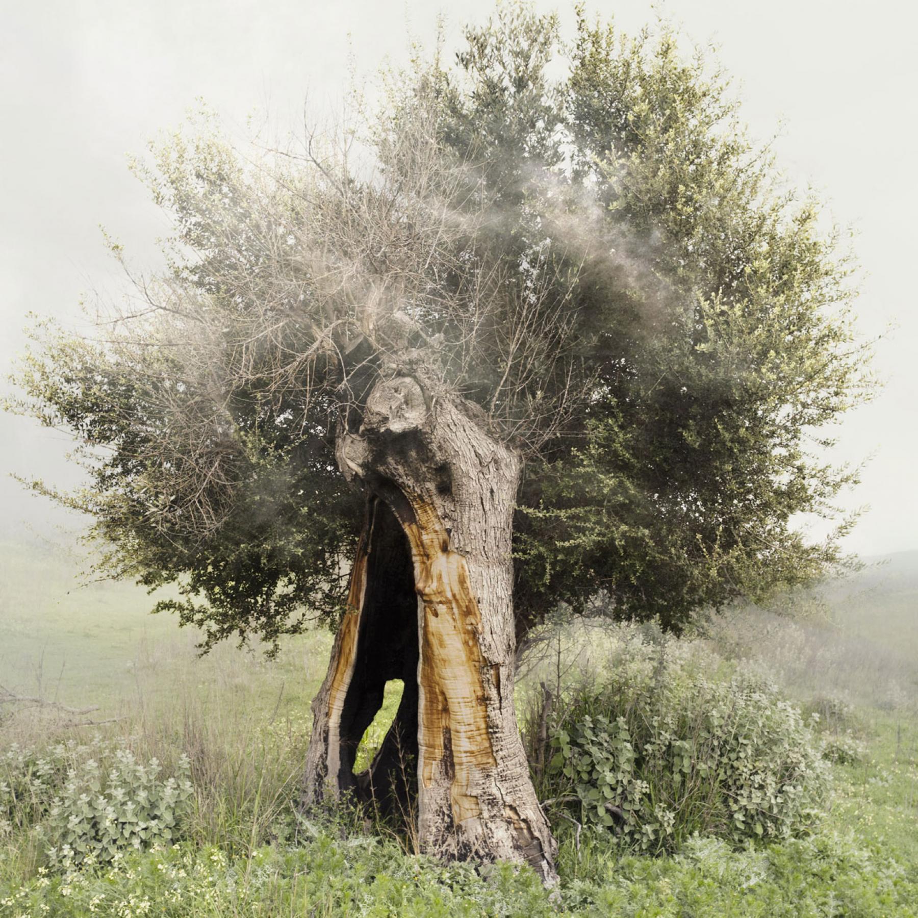 CandiaStrom - Philosophy Natural Materials 3